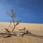 Klimatkrisens sommarvärme